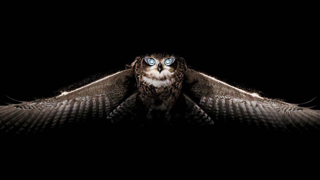 Cool Owl Wallpaper - wallpaper background