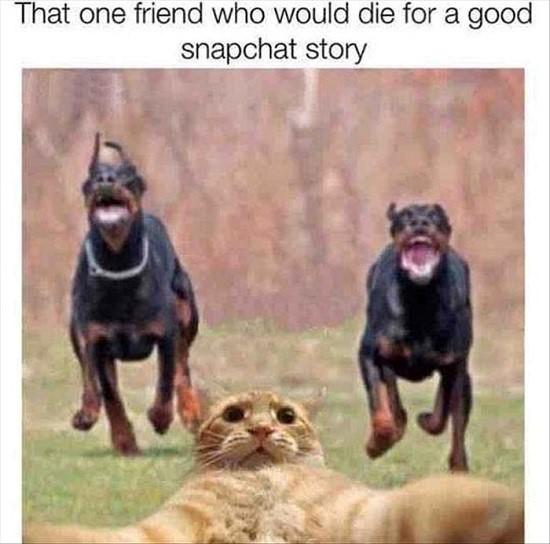 Random Memes – Volume 3