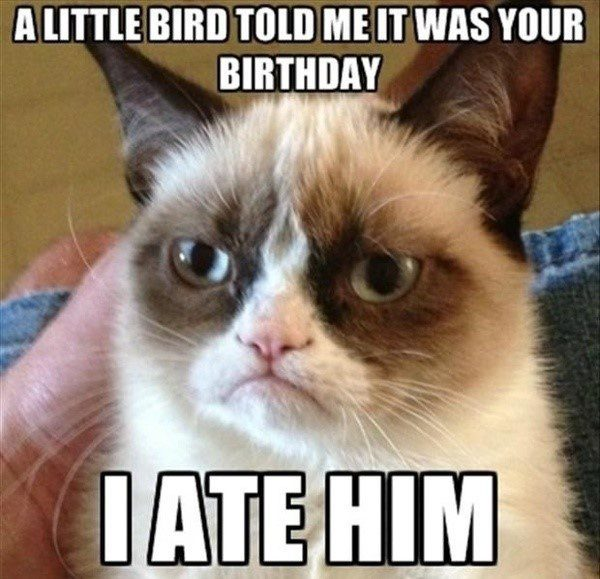 Grumpy Cat Birthday - funny meme