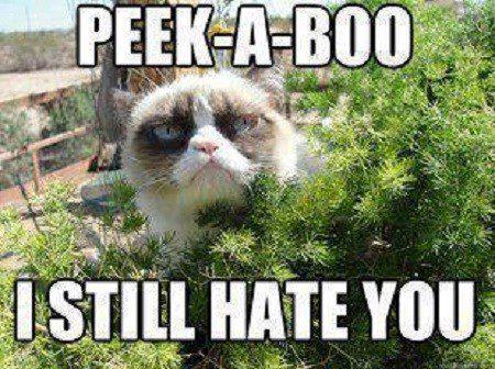 Peek-A-Boo I Still Hate You - grumpy cat meme