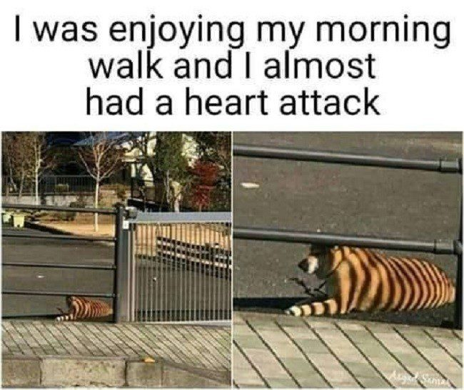 Almost Had A Heart Attack 1