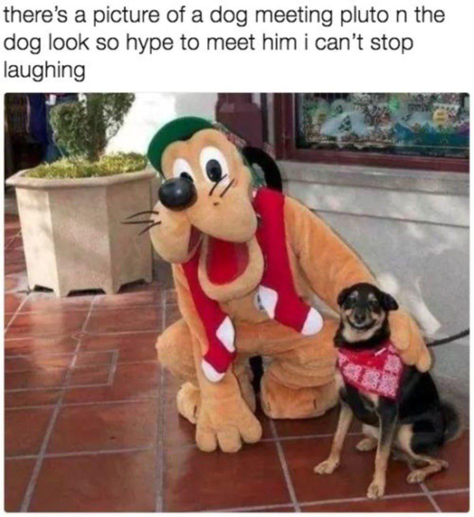 Dog Meeting Pluto