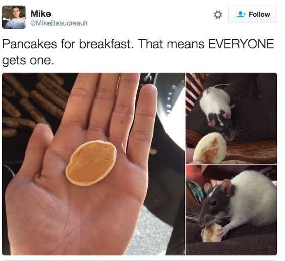 Everyone Gets Pancakes