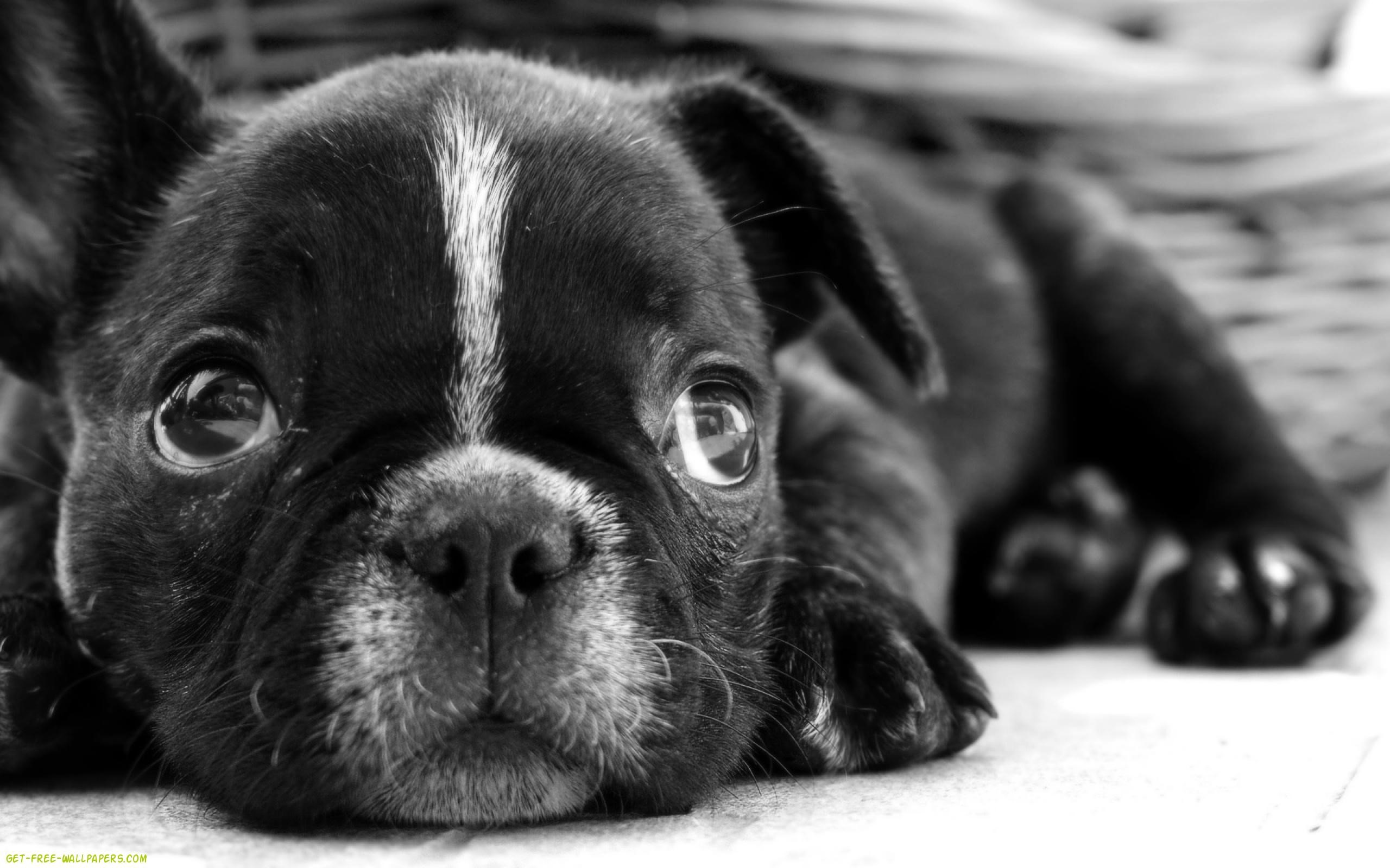 The 50 Best Puppy Wallpapers