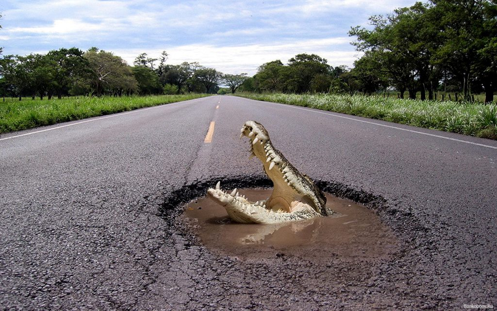 Gator In The Road - Funny Wallpaper