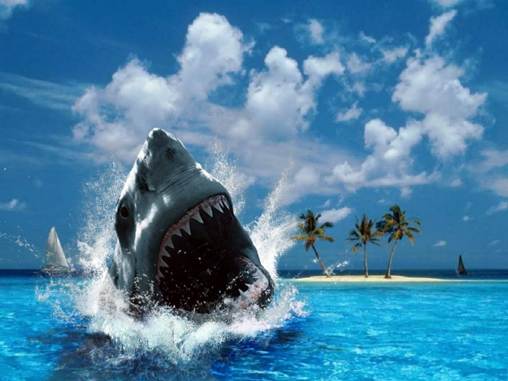 HD Shark Wallpaper - hd tablet wallpaper background