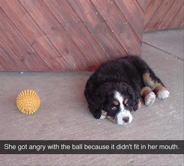 Got Angry With The Ball