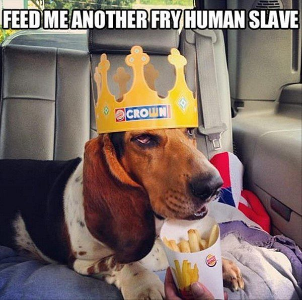 Feed Me Another Fry - funny dog picture