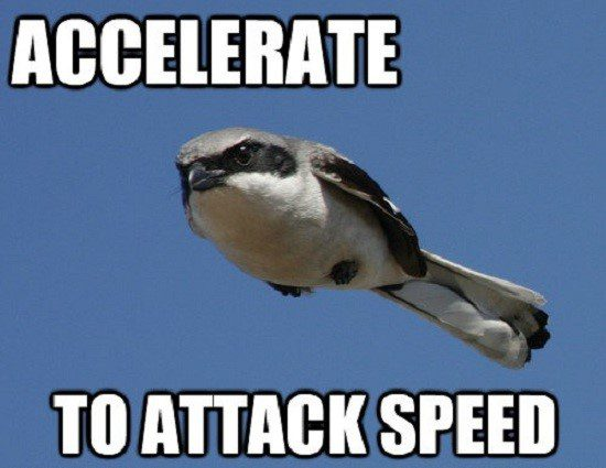 Accelerate To Attack Speed - Bird Flying Fast