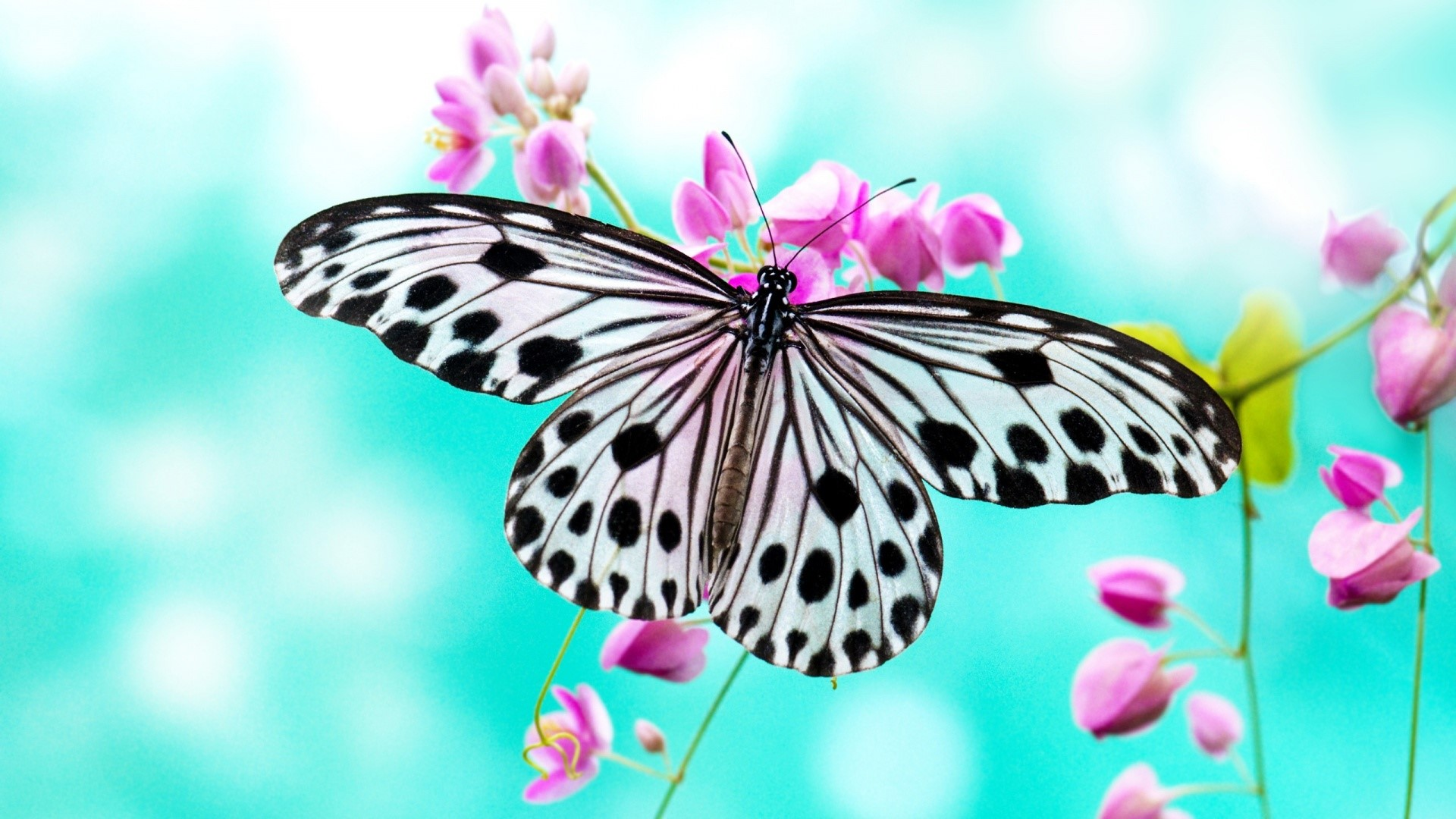 50 Best Butterfly Wallpapers