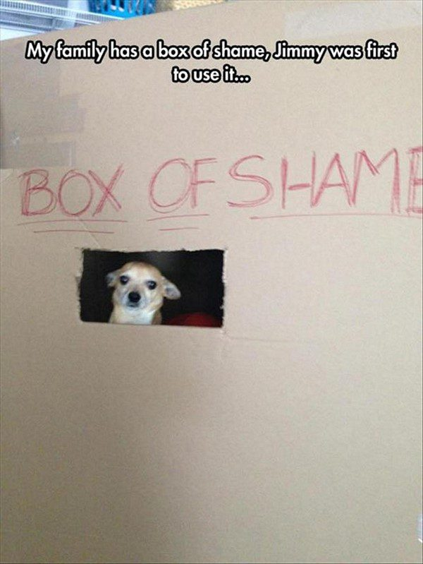 In The Box Of Shame - Funny dog picture