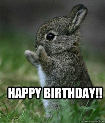 bunny rabbit birthday meme