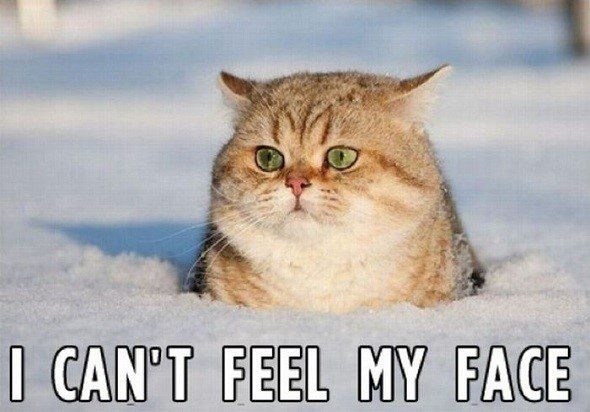 I Can't Feel My Face - Funny Caption Photo - cat in the snow