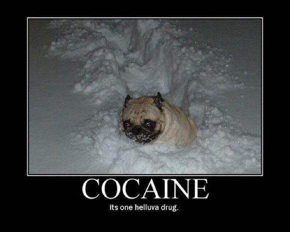 Snow Pug - funny dog in the snow caption photo funny
