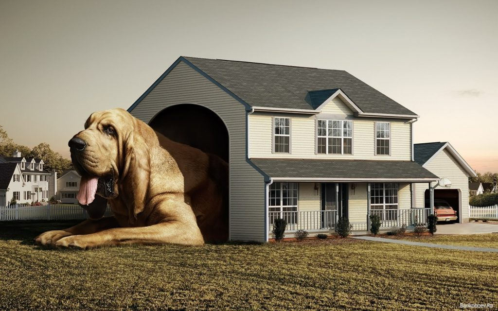 Giant Dog In Giant Dog House - funny wallpaper - funny desktop background
