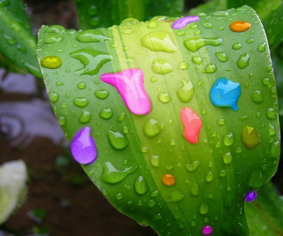 HD Water Colorful Water Droplets On A Leaf - Wallpaper Background