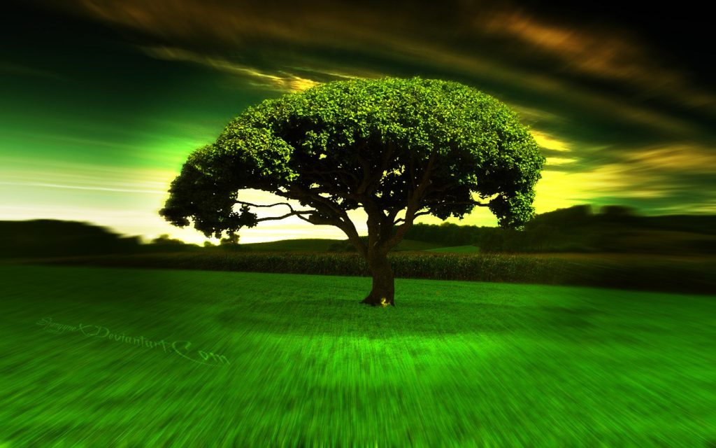 Amazing Landscape Background - Cool Tree and sky - desktop background wallpaper