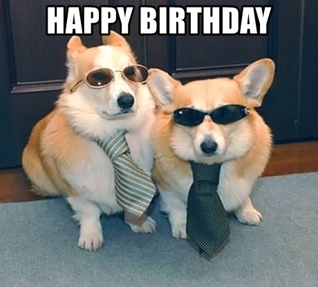 corgi dog birthday meme