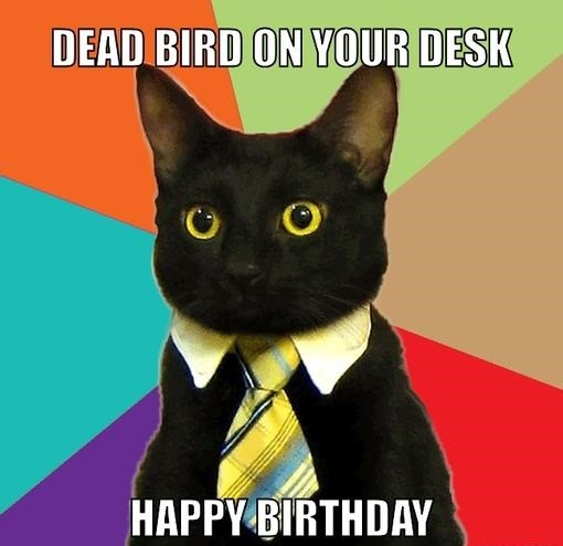 business cat - birthday meme