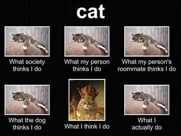 How Cats Are