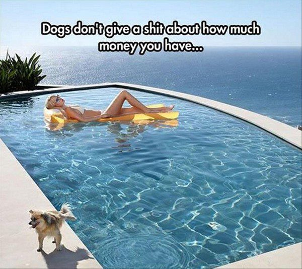 Dogs Don't Care - funny animal picture