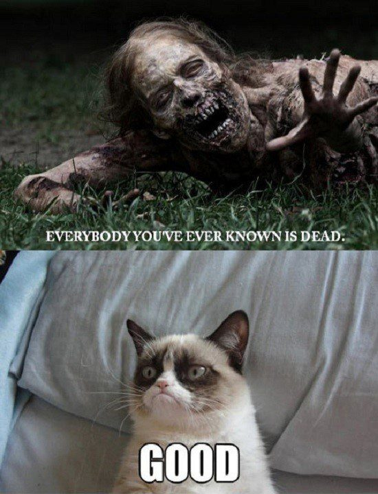 Everyone Is Dead Good- Grumpy Cat Meme - funny caption photo