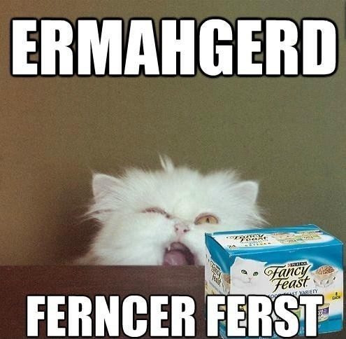 Ermahgerd Cat Fancy Feast - funny hilarious caption picture