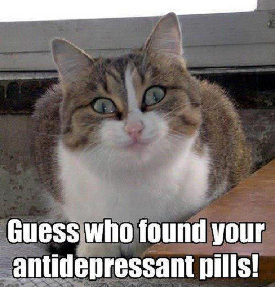 Guess Who Found Your Antidepressant Pills! - funny cat caption photo