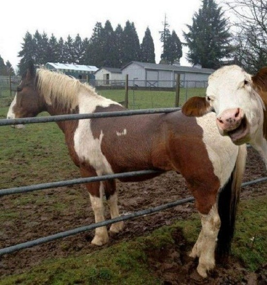 Funny Photobomb Pictures