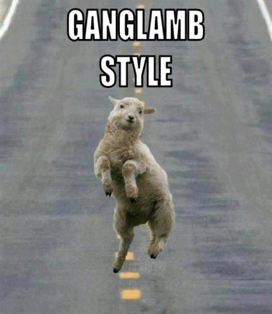 Ganglamb Style - Funny Caption Photo