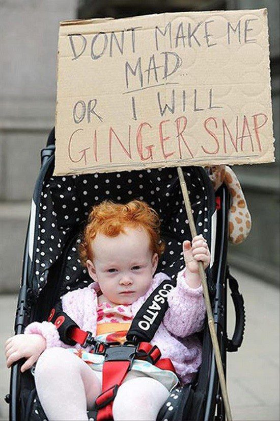 Don't Make Me Mad, I Will Gingersnap! - Funny Meme Photo