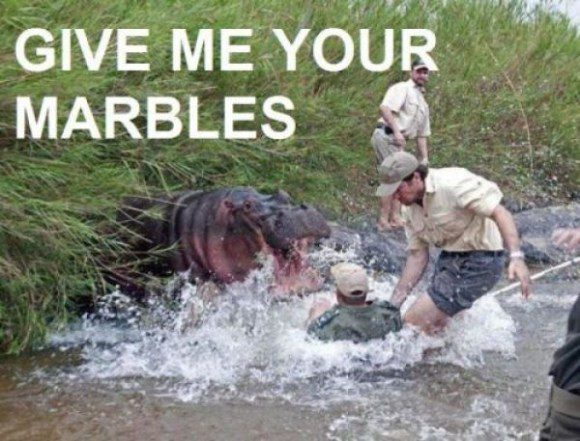 Give Me Your Marbles - Hilarious Caption Photo