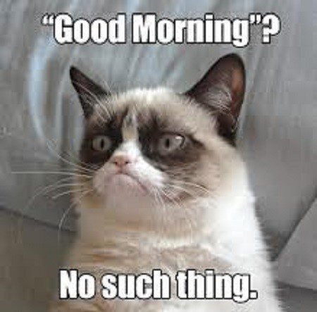 Good Morning? No Such Thing - grumpy cat meme