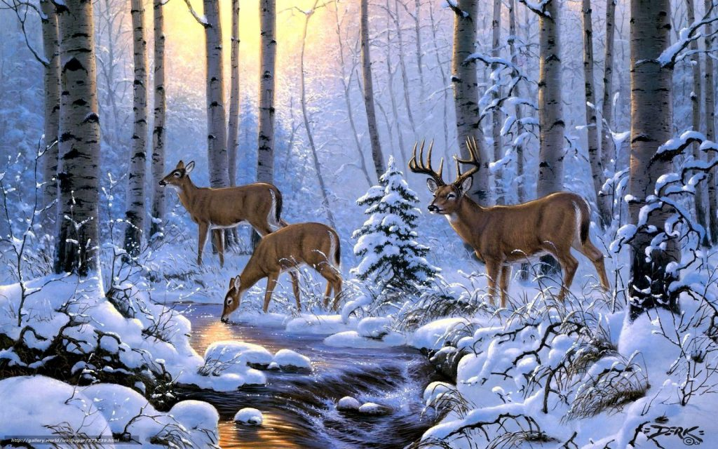 winter deer drinking from a stream. water. wallpaper background