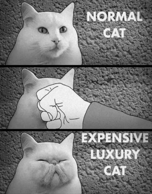 Normal Cat Vs . Expensive Luxury Cat - funny animal picture