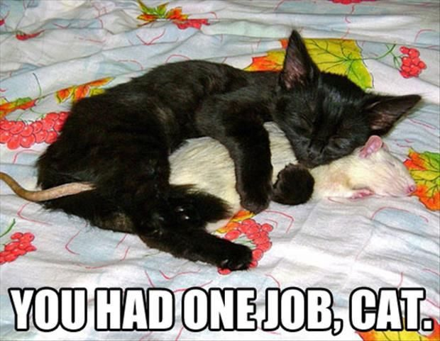 You Had One Job, Cat. - funny meme image