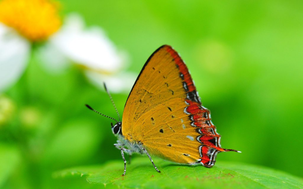 HD Butterfly Wallpaper Background - butterfly sitting on a green leaf