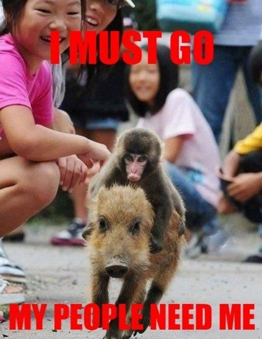 Monkey Riding A Boar - Funny Caption Photo