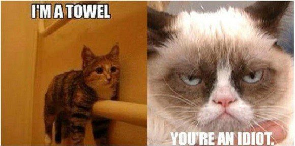 I'm A Towel - Grumpy Cat Meme