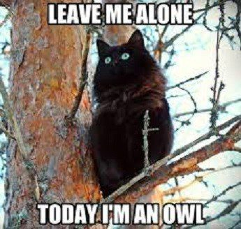Leave Me Alone, I'm An Owl - Funny Cat Picture