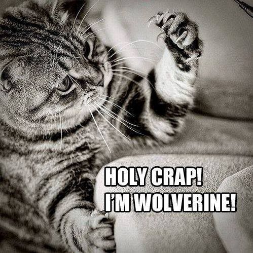 I'm Wolverine! - Funny Cat animal picture