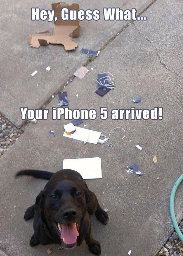 You iPhone Has Arrived - Funny Photo
