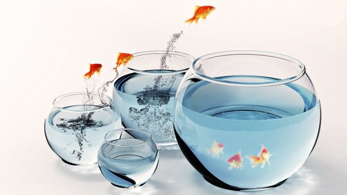 Out Of The Bowl - goldfish jumping out of the bowl into other bowls. tablet wallpaper