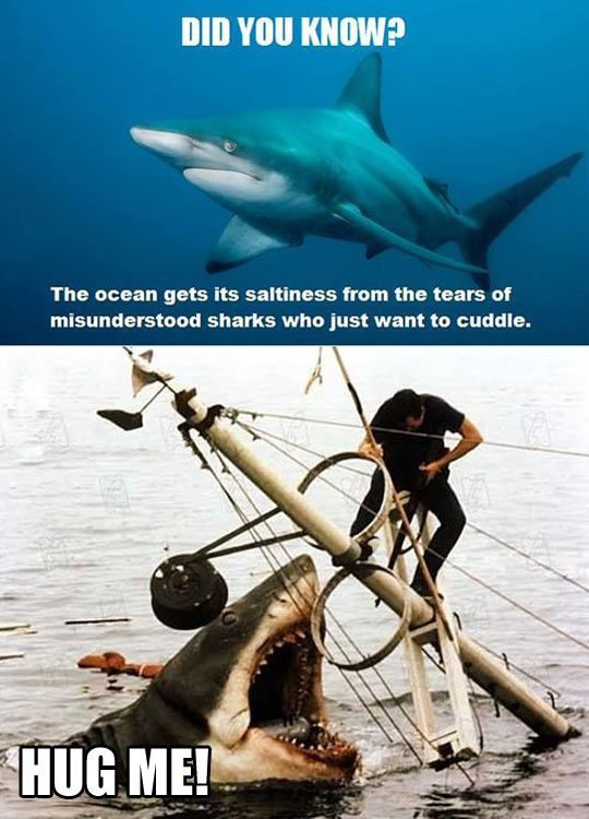 Sharks Just Want To Cuddle - Funny Photo