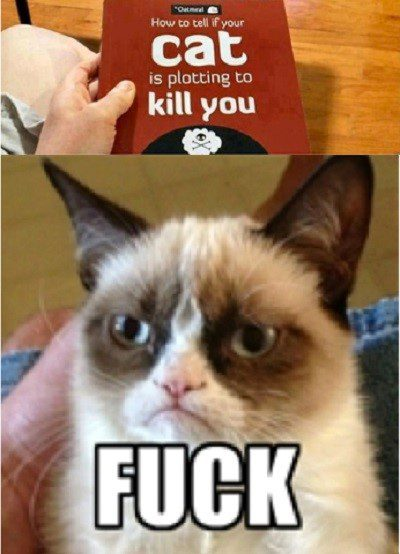 How To Tell If Your Cat Is Plotting To Kill You - Grumpy Cat Meme