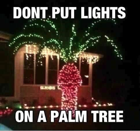 Don't Put Lights On A Palm Tree - Funny Image Meme
