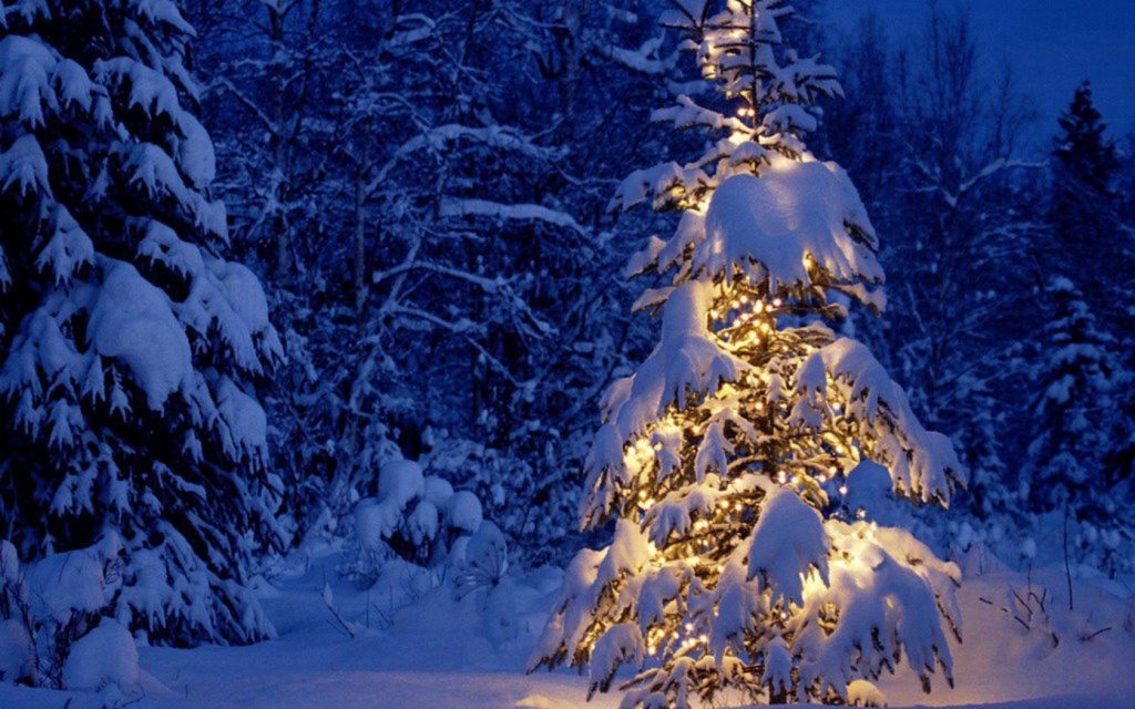 Snowy Tree With White Christmas Lights - winter wallpaper background
