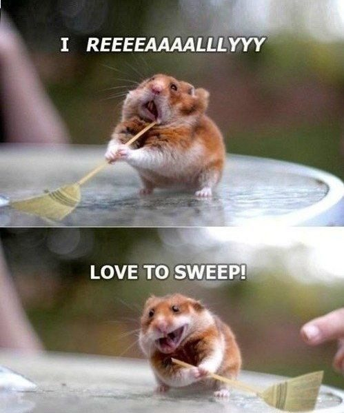 Loves To Sweep - funny picture