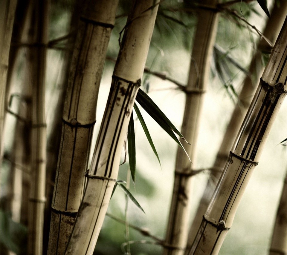 Cool Bamboo Forest - hd tablet wallpaper background