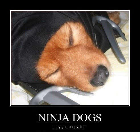 Ninja Dogs - Hilarious Caption Photo - Funny Meme